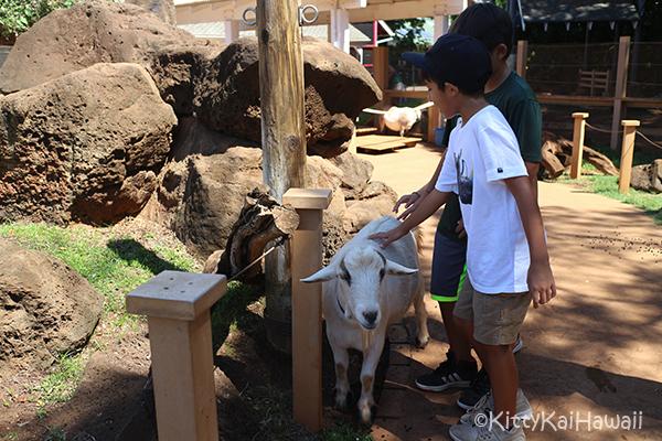 zoo-petting.jpg