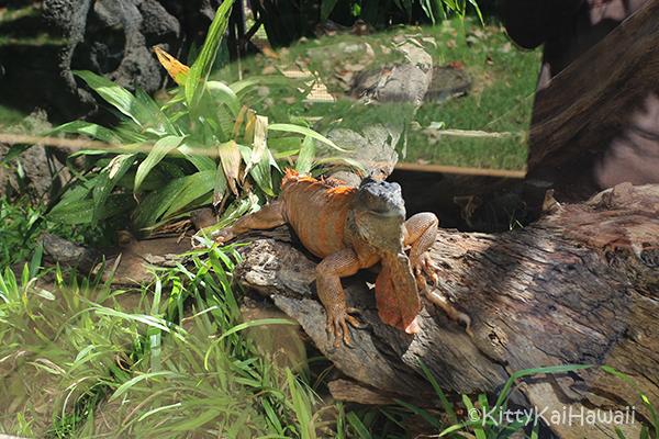 zoo-rep2.jpg
